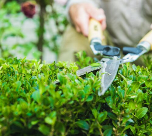 garden-shears-trimming-hedge-ADY8VCM