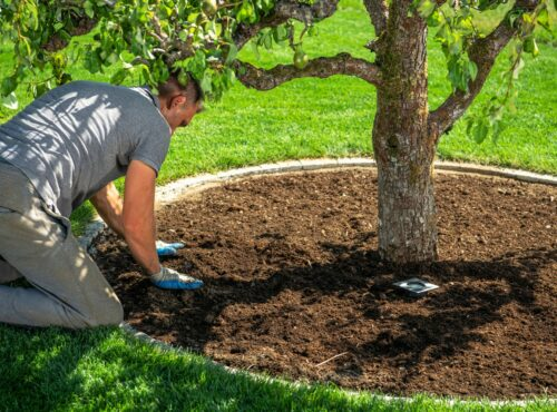 Caucasian Men in His 40s Redesigning His Garden Creating Circle Around Mature Pear Tree and Installing Ground Level Illumination.